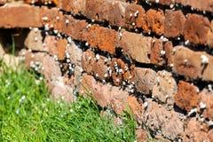 Orange alte Backsteinmauer mit Schnecken Lizenzfreie Stockbilder