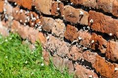 Orange alte Backsteinmauer mit Schnecken Stockbilder