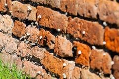 Orange alte Backsteinmauer mit Schnecken Lizenzfreies Stockbild
