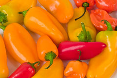 Orange And Red Peppers Royalty Free Stock Images