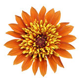 Orange And Yellow Big Flower Royalty Free Stock Photography