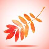Orange Aquarell gemaltes Ebereschenbaumblatt Stockfotografie