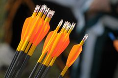 Orange archery arrows Stock Photos