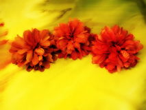 Orange artificial fabric flowers Stock Images