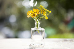 Orange aster flowers in a vase Royalty Free Stock Photos