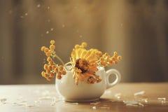 Orange aster flowers in a vase Stock Image
