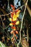 Orange auf gelber Blume lizenzfreie stockbilder