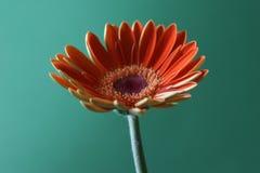 Orange auf Grün Lizenzfreies Stockfoto
