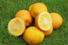 Orange auf grünem Gras Stockfotos