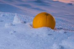 Orange auf Schnee Stockbilder