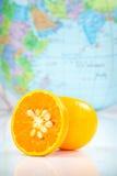 Orange auf Weiß Stockfotografie