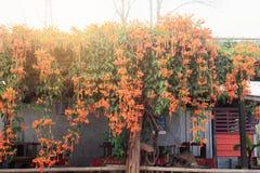Orange Aufenthalt der Blumen zu Hause Stockfoto