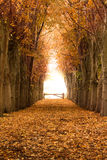 Orange autumn and fall forest pathway Royalty Free Stock Images
