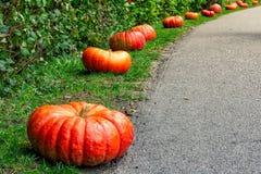 Orange Autumn Fall Pumpkin auf grünem Gras draußen bewirtschaften Tageszeit Lizenzfreies Stockbild