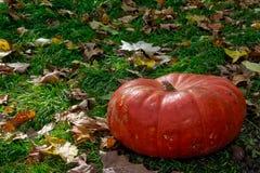 Orange Autumn Fall Pumpkin auf grünem Gras draußen bewirtschaften Tageszeit Lizenzfreie Stockfotografie