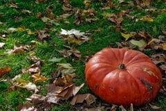 Orange Autumn Fall Pumpkin on Green Grass Outdoors Farm Daytime. Halloween Decoration Royalty Free Stock Photos