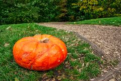 Orange Autumn Fall Pumpkin on Green Grass Outdoors Farm Daytime Royalty Free Stock Photography