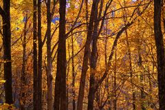 Orange Autumn Forest Royalty Free Stock Image
