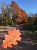 Orange autumn leaf outdoors Royalty Free Stock Images