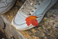 Orange autumn leaf on a white sneaker, autumn royalty free stock images
