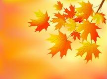 Orange autumn leaves Stock Image