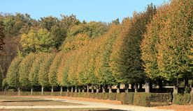 Orange Autumn leaves against the blue sky stock images