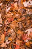 Orange Autumn Leaves Pattern. Vertical Orientation. Royalty Free Stock Photo