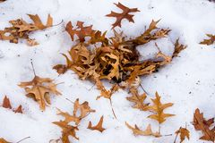 Orange autumn leaves, on a snowy, icy ground Royalty Free Stock Photography