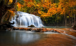 Orange autumn leaves on trees in forest and mountain river flows. Through stones and waterfall cascades royalty free stock image