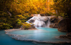 Orange autumn leaves of wild dense forest and scenic waterfall Stock Images