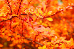 Orange autumn maple leaf alley Stock Photo