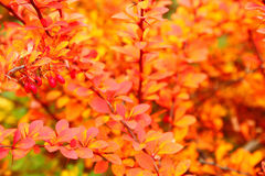 Orange autumn maple leaf alley Stock Image