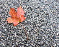 Orange Autumn Maple Leaf on Concrete Stock Photos