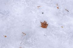Orange autumn maple leaf covered with winter ice on ground. Goodbye autumn. Concept of beggining of winter, holidays, christrmas, royalty free stock photo