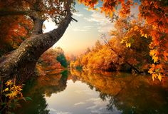 Free Orange Autumn On River Royalty Free Stock Images - 128624489