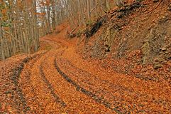 Orange autumn path through forest Royalty Free Stock Photography