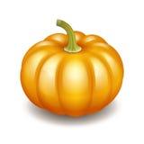 Orange autumn pumpkin icon Stock Images