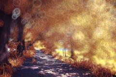 Orange autumn in sunny park Stock Photo