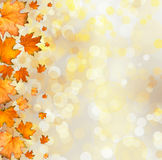 Orange autumnal branch of  tree on abstract background with boke Stock Images