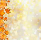Orange autumnal branch of  tree on abstract background Royalty Free Stock Image