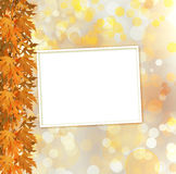 Orange autumnal branch of  tree on  abstract background Stock Image