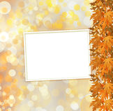 Orange autumnal branch of  tree on abstract background Royalty Free Stock Photos