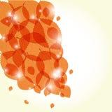 Orange autumnal leaves. Royalty Free Stock Image