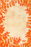 Orange autumnal leaves background Royalty Free Stock Images