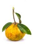 Orange avec le congé Images libres de droits