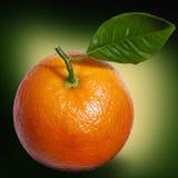 Orange avec le plan rapproché vert de lame Photographie stock libre de droits
