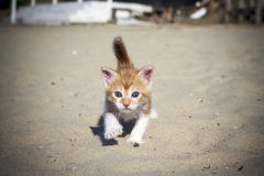 Orange baby kitten Royalty Free Stock Photo