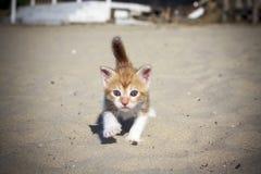 Orange baby kitten Royalty Free Stock Photo