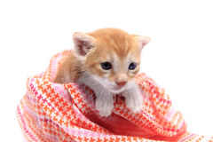 Orange baby kitten Royalty Free Stock Images