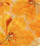 Orange background with autumn leaves Royalty Free Stock Images